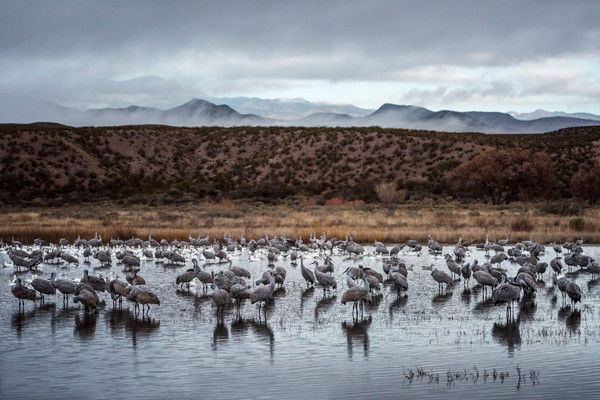 Grey Day - Bosque del Apache, Socorro, New Mexico 2015