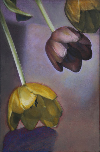 Three nearly perfect tulip blossoms, originally a black and white photograph, are hand colored by the artist Ryn Clarke using oil paints and colored pencil, changing the very nature of the image from stark photograph to velvety, rich and painterly.