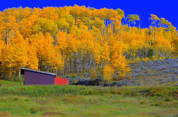 Red Barn Among the Aspens--Grand Lake, Colorado