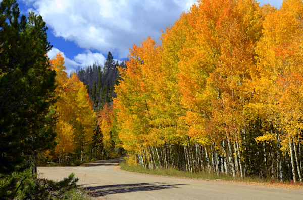 Road Into the Golden Aspens--Grand Lake, Colorado