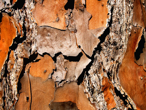 Tree Bark Makes Abstract Image