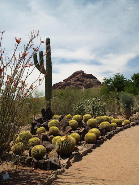 Collection of Cactus--Phoenix Botanical Garden