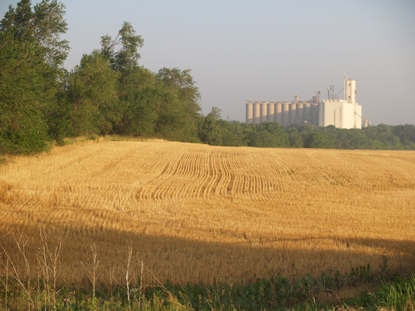 Wheatfield and Elevator--Typical Kansas Summer View