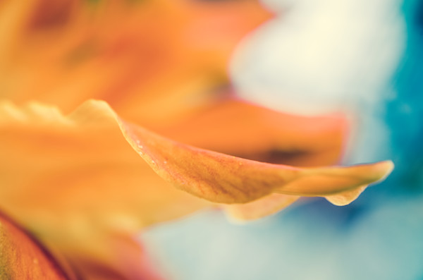 Serene Petals of Life Nature Photo Wall Art by Nature Photographer Melissa Fague