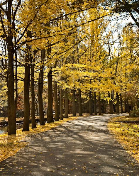 Fall Path Landscape Photo Wall Art by Landscape Photographer Melissa Fague