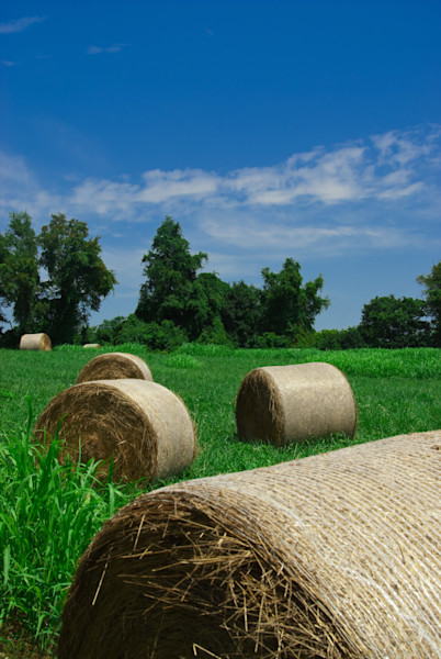 Hay Whatcha Doin in the Field Landscape Photo Wall Art by Landscape Photographer Melissa Fague