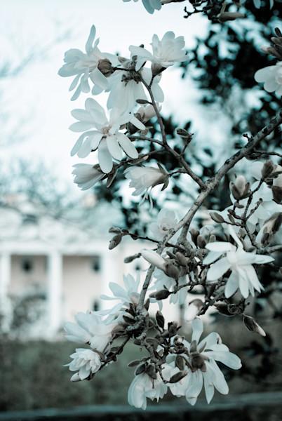 Mansion Blooms Landscape Photo Wall Art by Landscape Photographer Melissa Fague