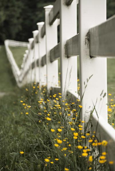 Specks of sunshine Landscape Photo Wall Art by Landscape Photographer Melissa Fague