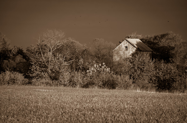 Abandoned Barn In The Trees Monochromatic Landscape Photo Wall Art by Landscape Photographer Melissa Fague