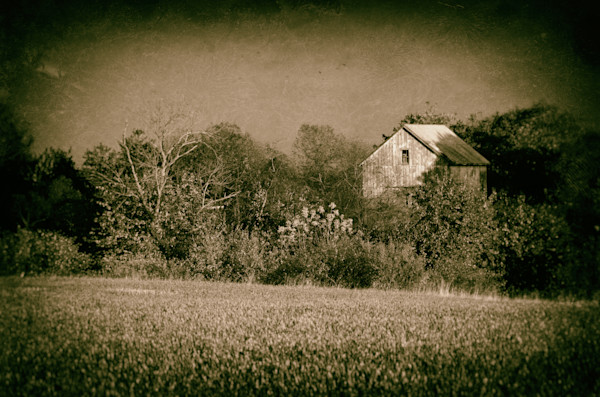Abandoned Barn In The Trees Vintage Landscape Photo Wall Art by Landscape Photographer Melissa Fague