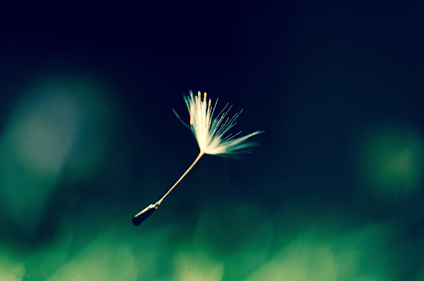Blowing in the Wind Nature Photo Wall Art by Nature Photographer Melissa Fague