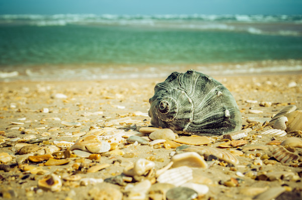 Daydreams on the Shore Nature Photo Wall Art by Nature Photographer Melissa Fague