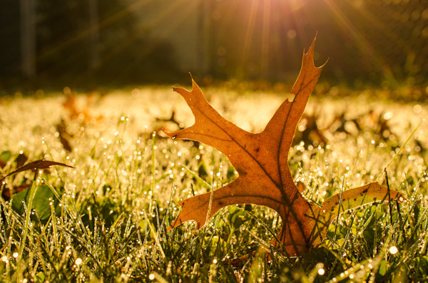 Fall Leaf in Morning Sun Nature Photo Wall Art by Nature Photographer Melissa Fague