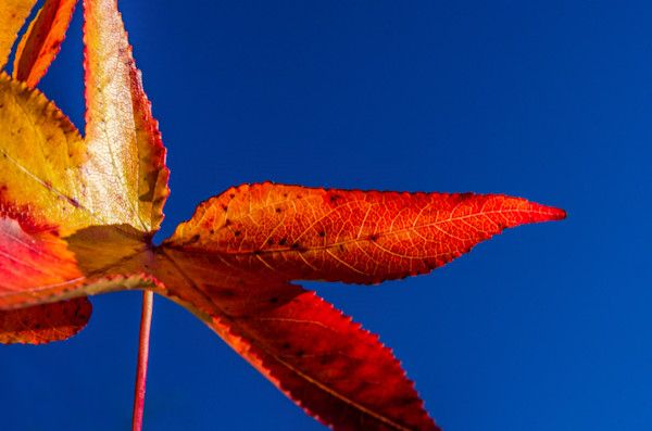 Fall Colors Nature Photo Wall Art by Nature Photographer Melissa Fague