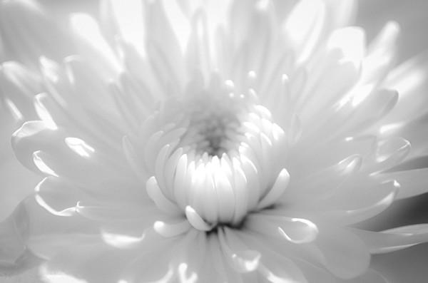 Infrared Flower 2 Nature Photo Wall Art by Nature Photographer Melissa Fague