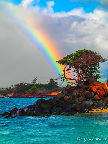 Bonsai Rainbow