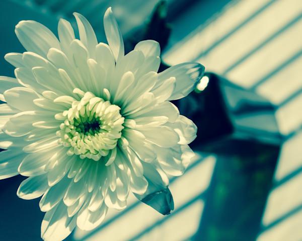 Melancholy Flower Nature Photo Wall Art by Nature Photographer Melissa Fague