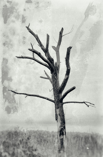 Rotting Away Alone Nature Photo Wall Art by Nature Photographer Melissa Fague