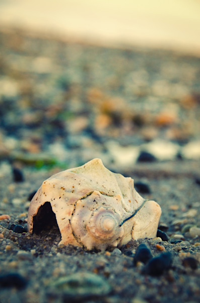 Shell at Bowers 2 Nature Photo Wall Art by Nature Photographer Melissa Fague