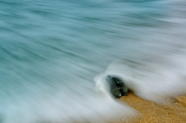 Whelk Seashell and Misty Wave Nature Photo Wall Art by Nature Photographer Melissa Fague