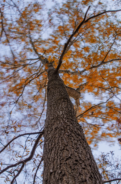 Wind in the Trees Nature Photo Wall Art by Nature Photographer Melissa Fague
