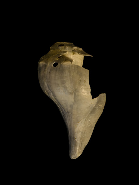 Beautiful States of Erosion Image 7 Whelk Shell Nature Photo Wall Art by Nature Photographer Melissa Fague