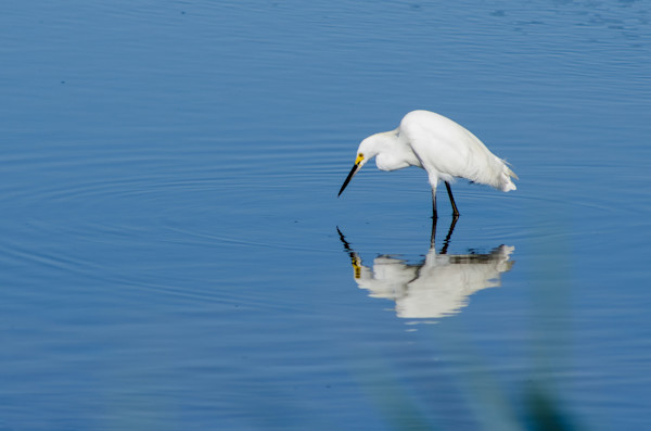 I see my Reflection Wildlife Photo Wall Art by Nature Photographer Melissa Fague