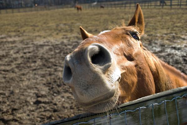 Nosey Horse Wildlife Photo Wall Art by Nature Photographer Melissa Fague