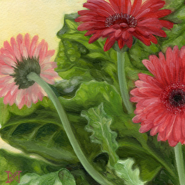 Youth (Gerbera Daisies)