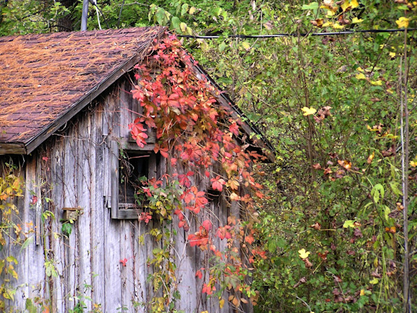 Old Shed in Pink