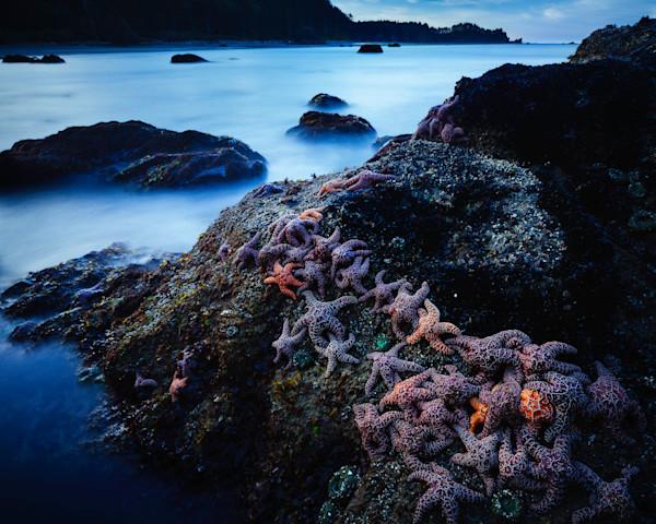 Morning Starfish
