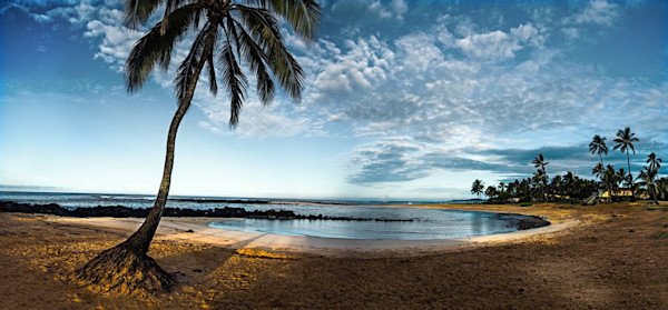 Poipu Palm