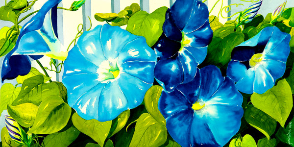 Morning Glories in Blue