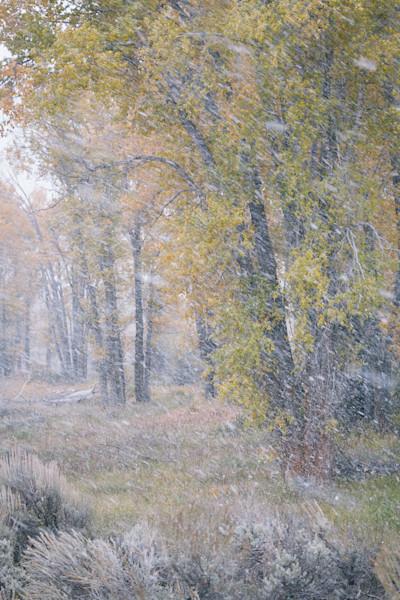 Snowy Cottonwoods