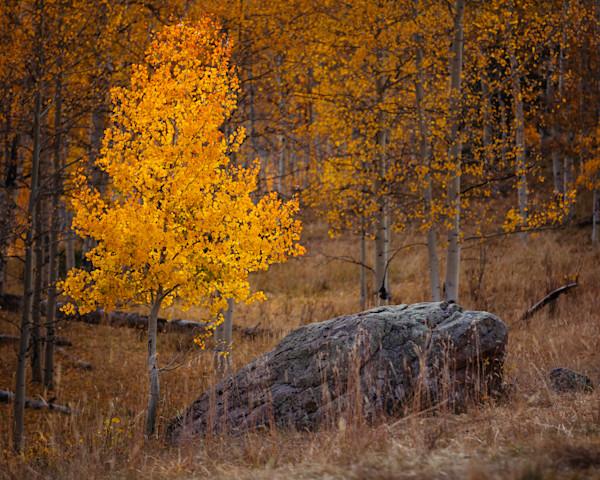 Gold in Autumn