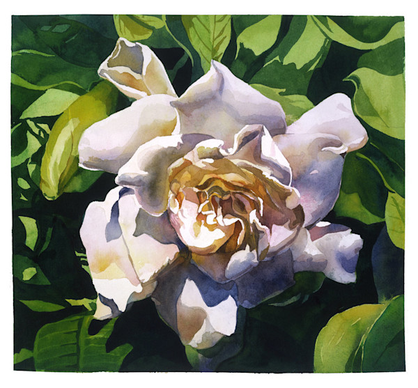 This stunning floral watercolor portrait of a Gardenia by artist Marlies Merk Najaka captures the striking beauty of the blossom itself.