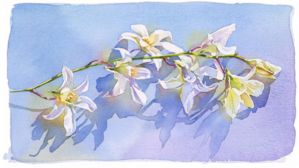 A stem of perfect white orchids cast deep blue shadows from the brilliant white sunlight in this watercolor by Marlies Merk Najaks.
