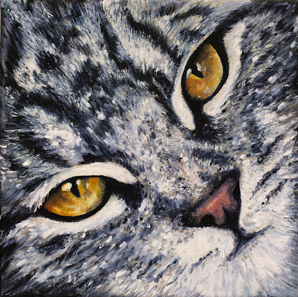 Bear the Cat's eyes, Cat Portrait - Artistic View