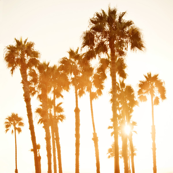 Palm Trees Photographs Beach Wall Art Decor