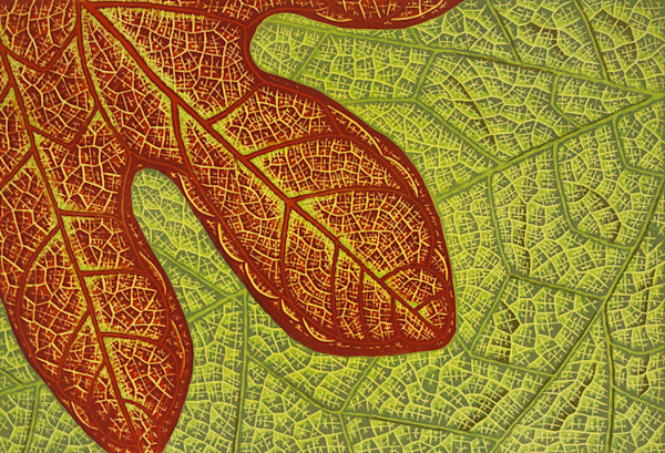 Upclose study of sassafras reveals the complex patterns of nature in this limited edition linocut print by Elizabeth Busey.