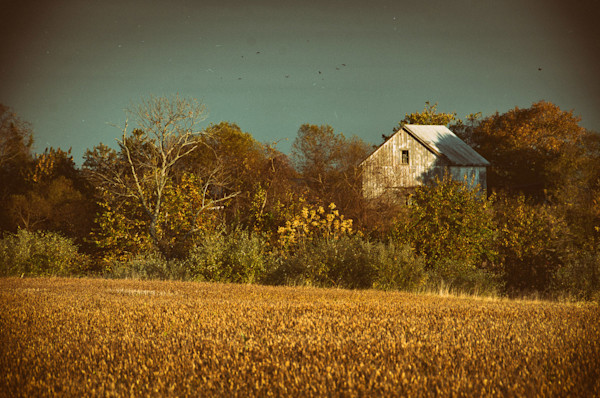 Abandoned Barn In The Trees Aged Colorized Limited Edition Signed Landscape Photograph by Melissa Fague