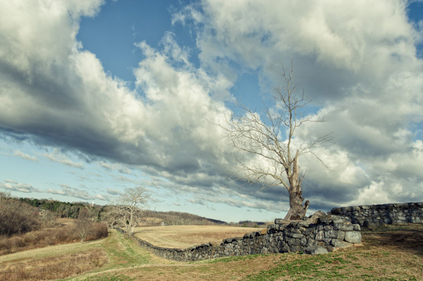 Dead Tree and Stone Wall - Split Toned Limited Edition Signed Landscape Photograph by Melissa Fague