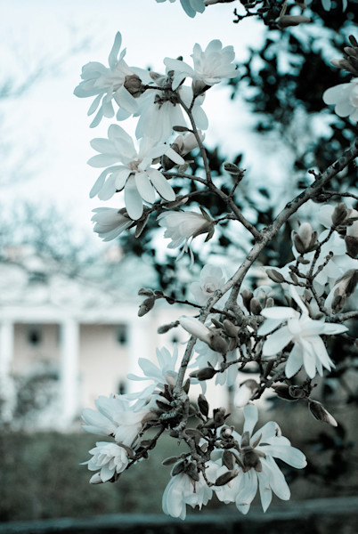 Mansion Blooms Limited Edition Signed Landscape Photograph by Melissa Fague