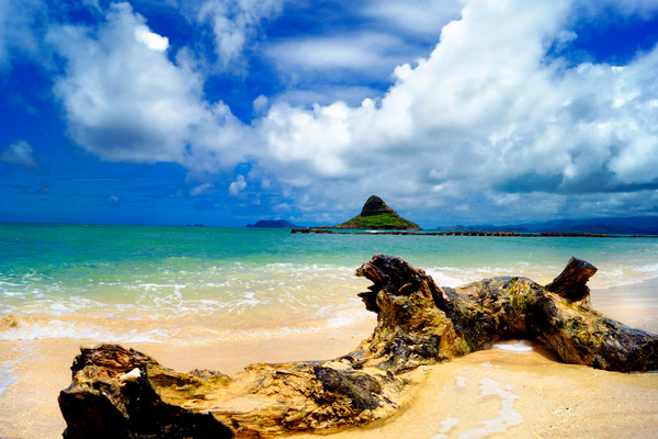 Water logged Fine Art Photograph hawaii beach Landscape