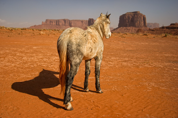 Navajo Pony After a Dust Storm - Signature Prints