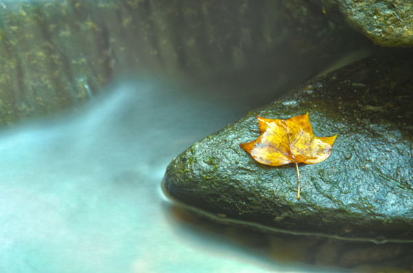 Misty Leaf Limited Edition Signed Fine Art Nature Photograph by Melissa Fague