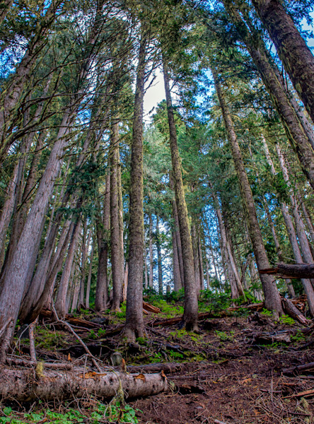 Fine Art Forest landscape Photograph rise up