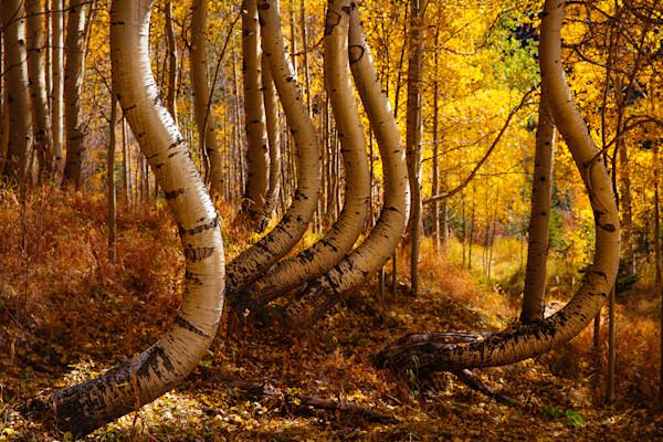 Curvy Trees