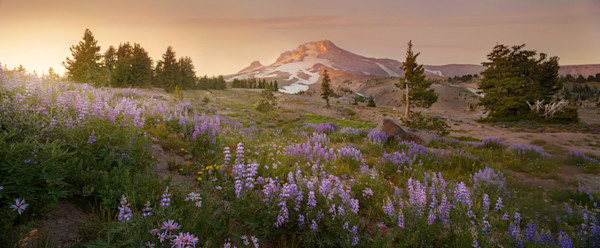 Mt Hood Photograph with Lupine