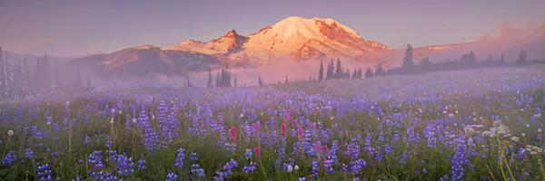 Mt Rainier Wildflower photograph Washington